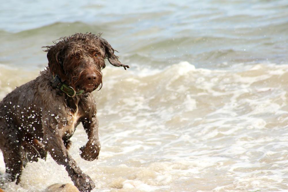 Exuberant splash!