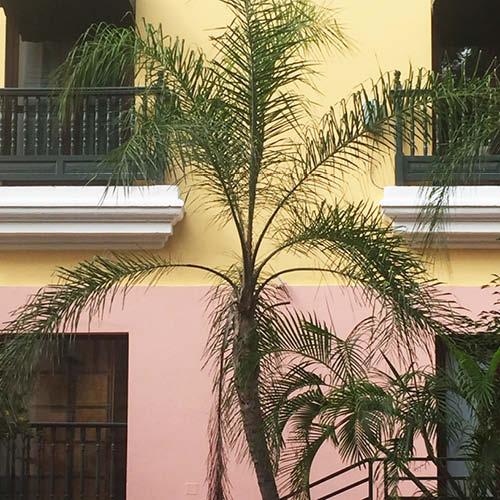 Sarah_Scales_Design_Studio_Travels_Old_San_Juan_Puerto_Rico_Exteriors_18.jpg