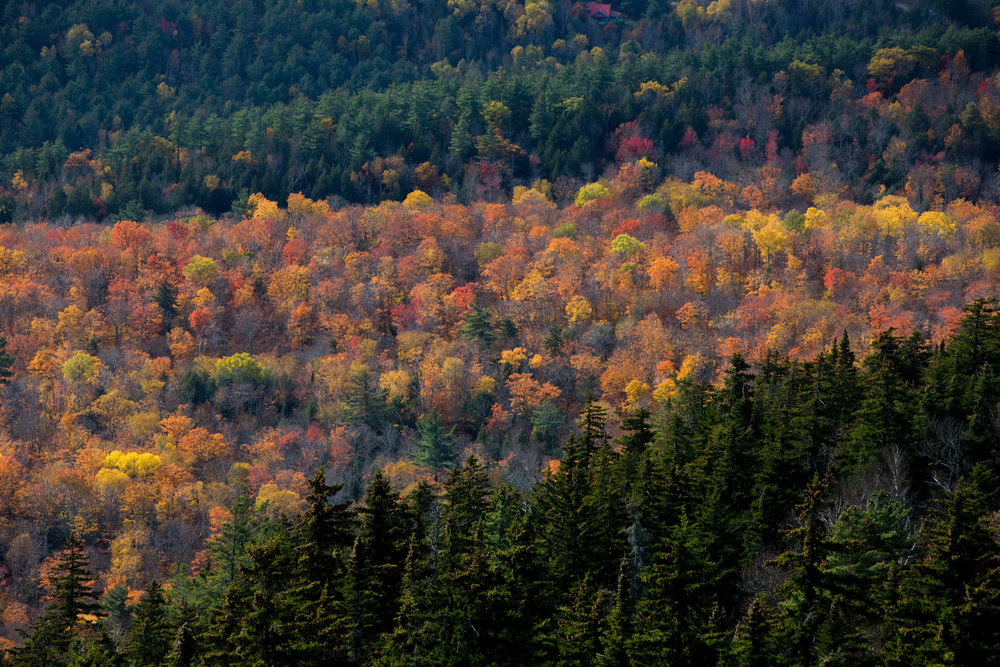 View from Crane Mountain in Fall