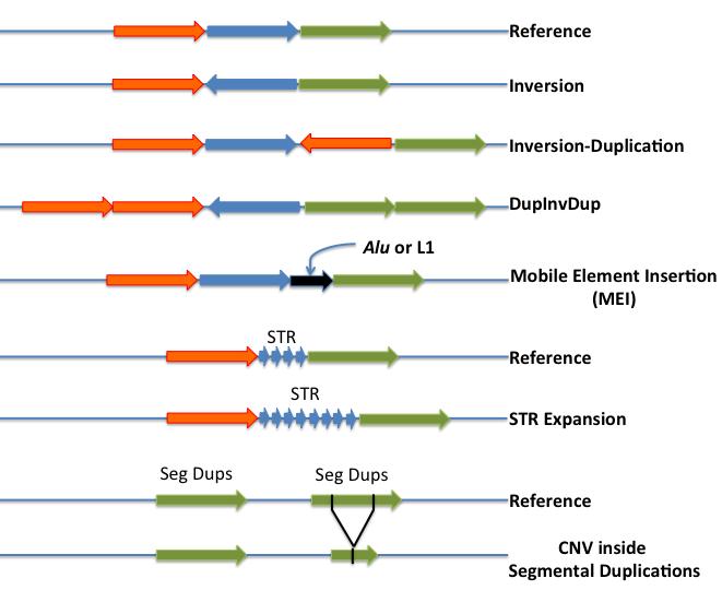 Complex structural variants