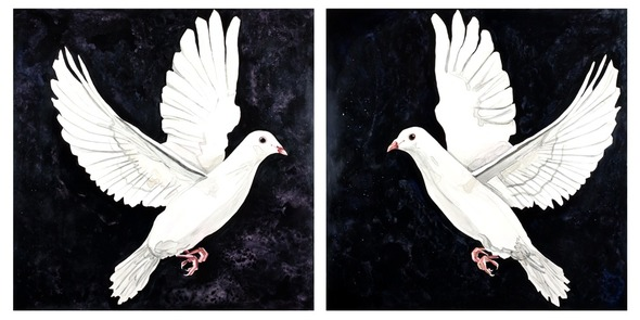 "Dove Diptych, watercolor on board, 30"" x 60"" each panel, 30"" x 30"" each panel"
