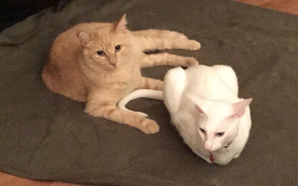 Mack and Titi Inseparable