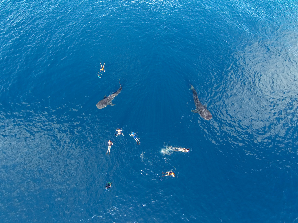 sample aerial, whale shark, credit Eric Cheng.JPG