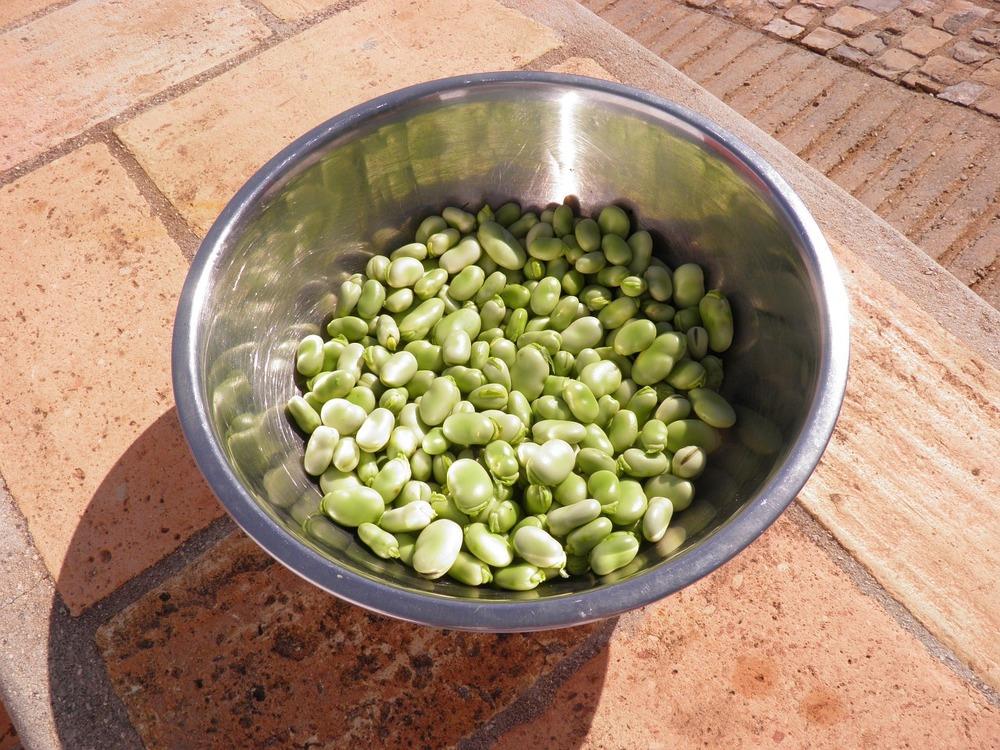 fava-broad-beans-1001279_1280.jpg