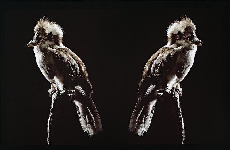 BROOK ANDREW , born 1970,  Ignoratia from 'Kalar Midday' series , 2004, 103 x 160cm