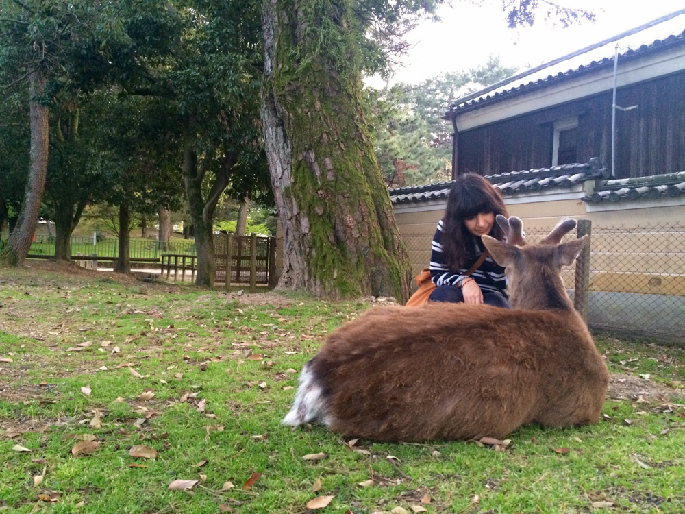 A gentle deer in Nara Park!