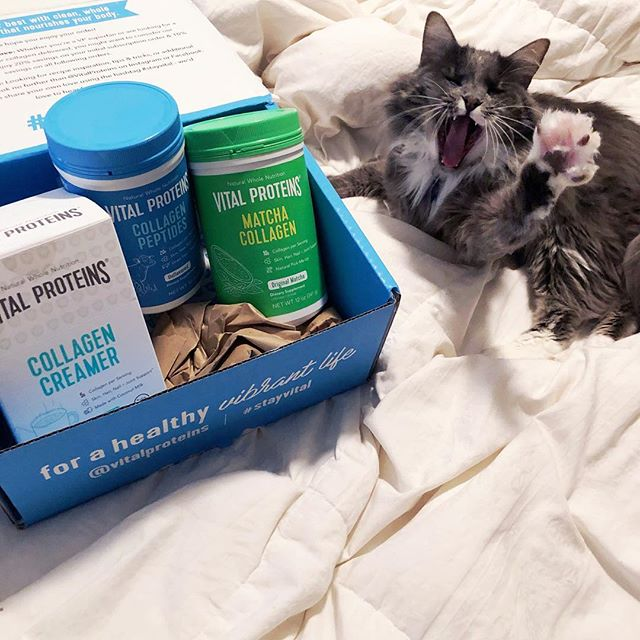 Spud 🐈 and I were very excited that @vitalproteins sent us a box of goods to try 🤗 I had been wanting to try the Matcha Collagen 🍵 for a while and let me tell you guys, it lived up to the hype! I made my own matcha latte 🍵 this morning by adding a scoop of the Matcha Collagen to a mug of hot water. I blended it together with my milk frother 🌪 and then added some frothed almond milk 🥛 to the top 👌. It tastes great- not too sweet and has caffeine for a natural pick-me-up 🏃🏼♀️ I love that just one scoop of the Matcha Collagen has 9g of protein, 10g of collagen, and only 2g of sugar. I can't wait to try the rest of these @vitalproteins products and Spud 🐈 can't wait to sit in the box they came in 😹 📦 Thanks @vitalproteins 🙏 #stayvital #vitalproteins #collagenpeptides