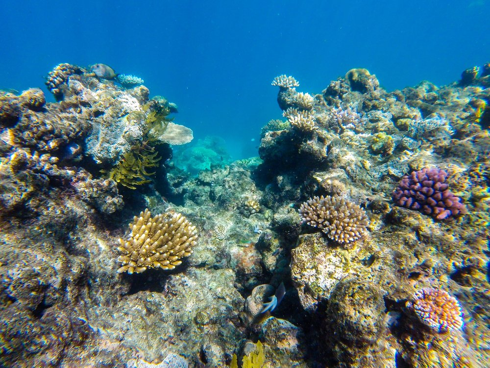 All the beautiful color of the corals