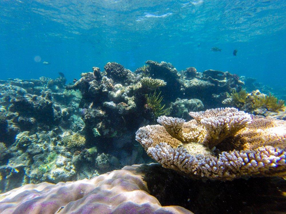 Loving all the unique corals