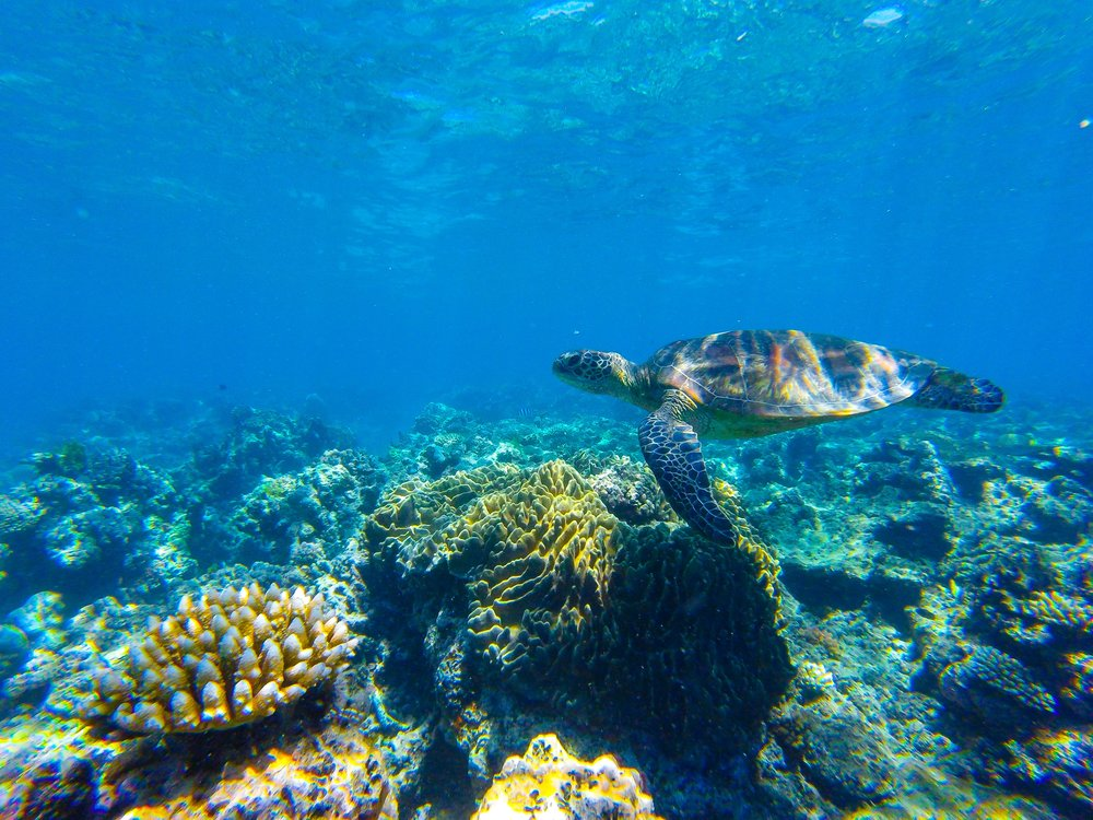 Our Sea Turtle buddy.