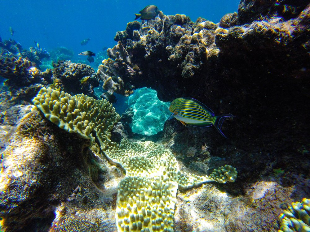 Exploring the reef with fish