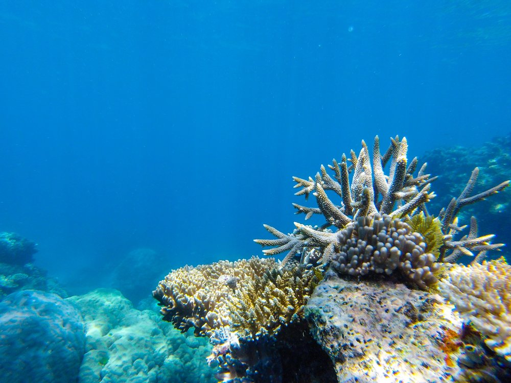 Quinessential coral