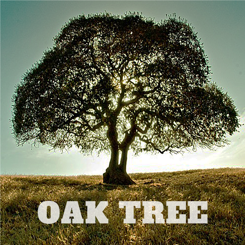 Oak Tree - Single - Available on iTunes – $0.99
