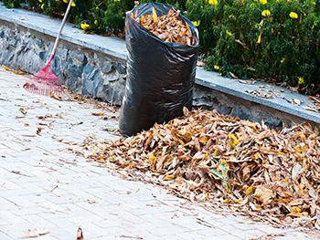 leaf-removal.jpg