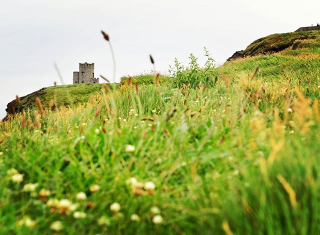 Come Away To The Castle :: Mellow Meadow #CliffsofMoher #cliffs #ireland #landscape #beauty #meadow #girl #scenery #green #lucky #Nikon #D610 #goldeneyephotography #water #ocean #irish #nature #naturephotography #nikonpros #goldeneyephotography #vscophile #photooftheday #vsco #instadaily #instagood #justgoshoot