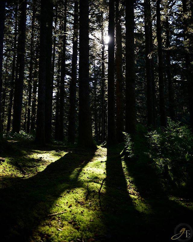 Shadows :: Forest #shadows #shadow #forest #blackforest #nikon #D610 #light #beauty #dark #darkness #alone #vsco #vscocam #wild #wilderness #outback #alaska #alaskanwilderness #moss #goldeneyephotography #goldeneye_photography #nature #naturelovers #instagood #instanature #darkforest
