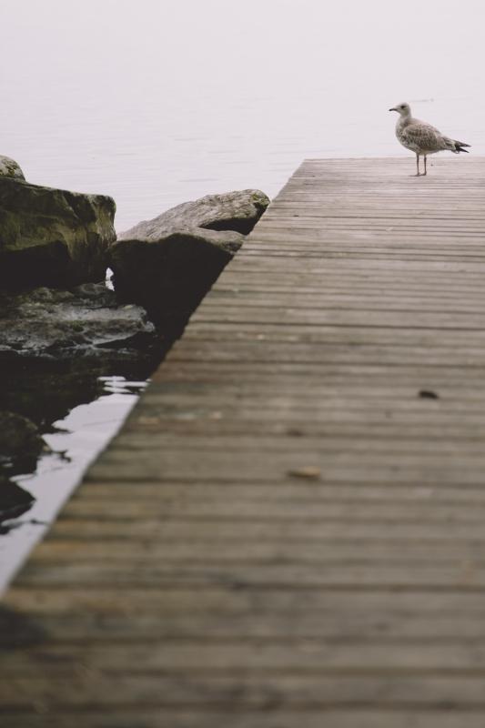 Finland lake Näsijärvi seagull