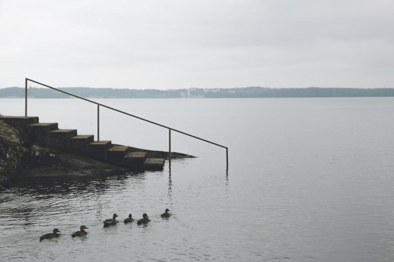 Finland lake Näsijärvi Tampere ducks