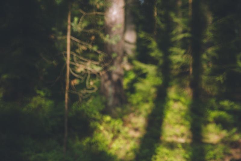 Tampere forest Pyynikki Finland Suomi