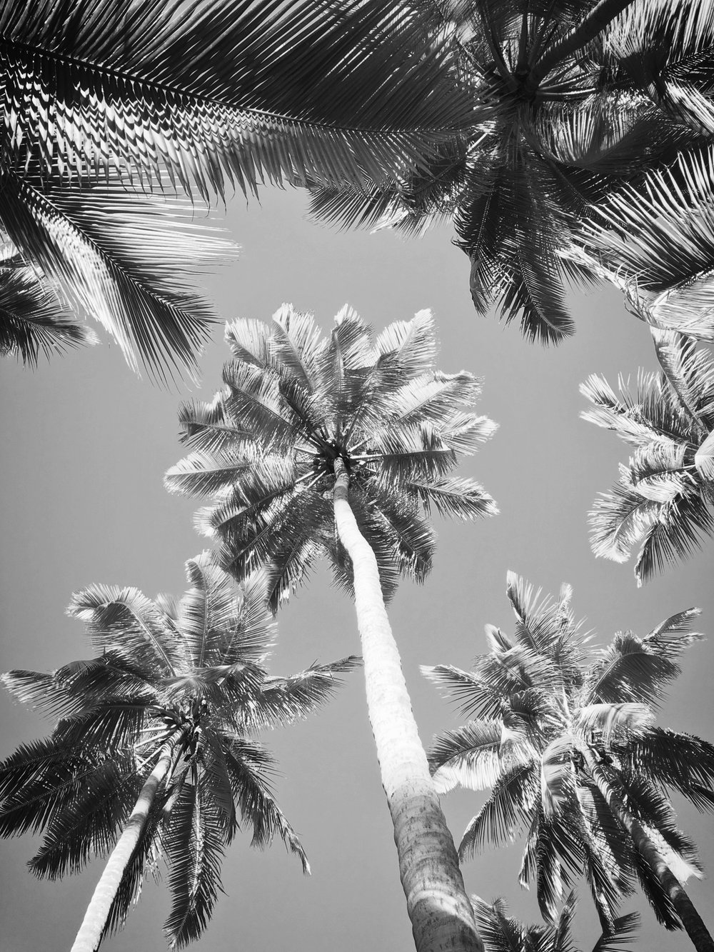 palm-trees-and-sky-1457006925jNX.jpg