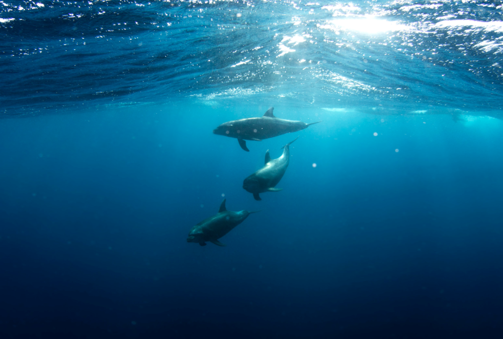 Dolphin Photography: Talia Cohen @ taliacohen