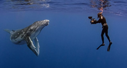 """Cinematographer Howard Hall films a juvenile Humpback whale"""" Credit: Michele Hall"""