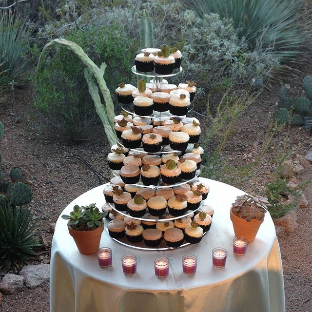 Super cute, desert cupcakes at Desert Botanical Gardens tonight! Yummmm!