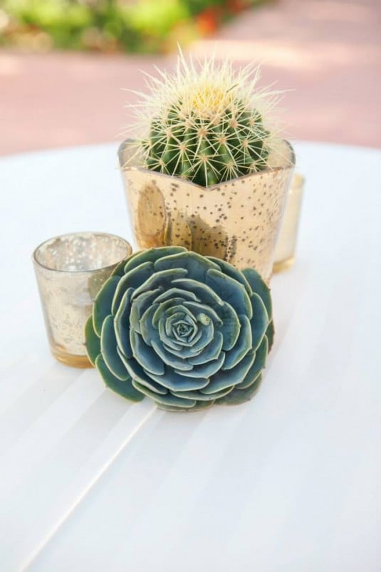 wedding cactus decor