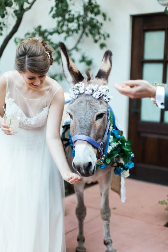 Burro wedding
