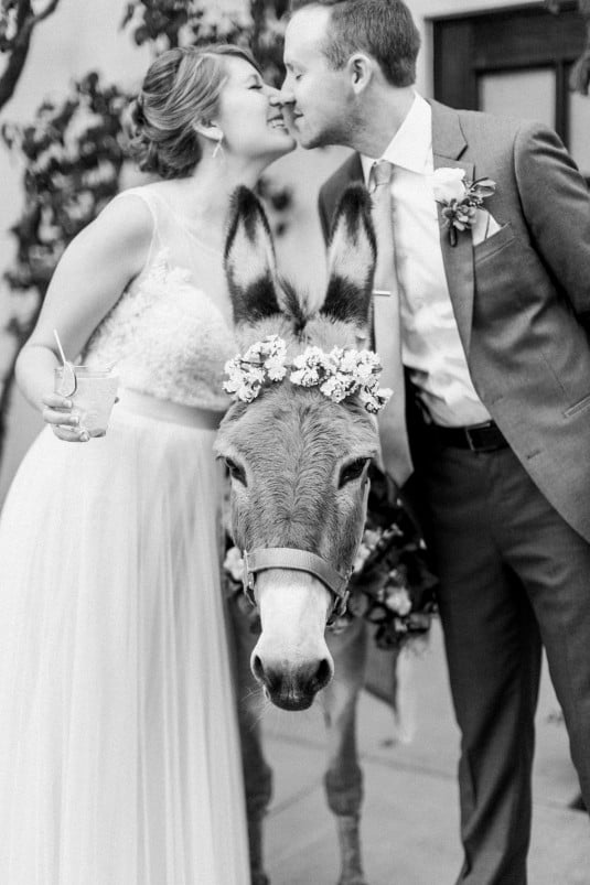 Wedding with Burro