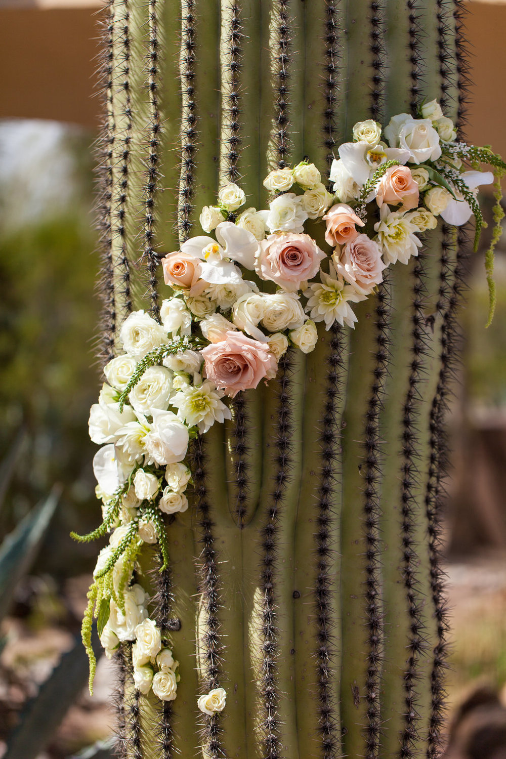 Wedding decor, cactus, flowers, ivory, peach, blush, rustic, southwest, ceremony, Phoenix Scottsdale Arizona Wedding Planner