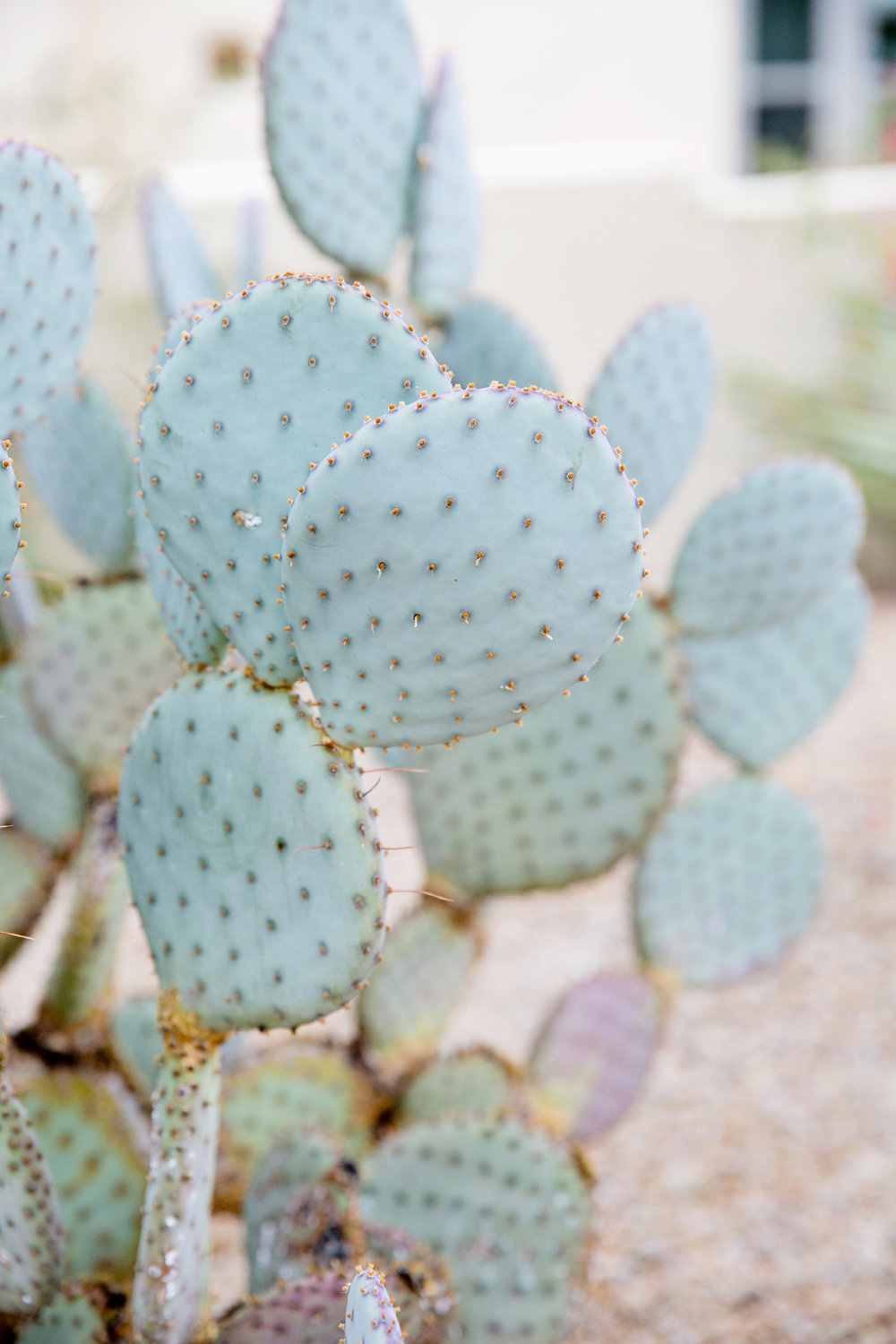 Arizona wedding, Camelback Mountain wedding, pink flowers, wedding details, cacti, Arizona cacti