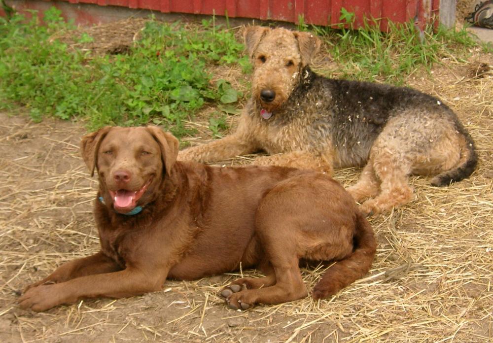 Dogs_Lilly & Bris.JPG