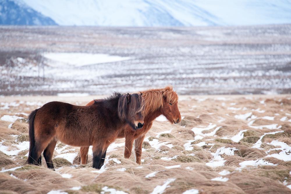 Iceland-9-von-12.jpg