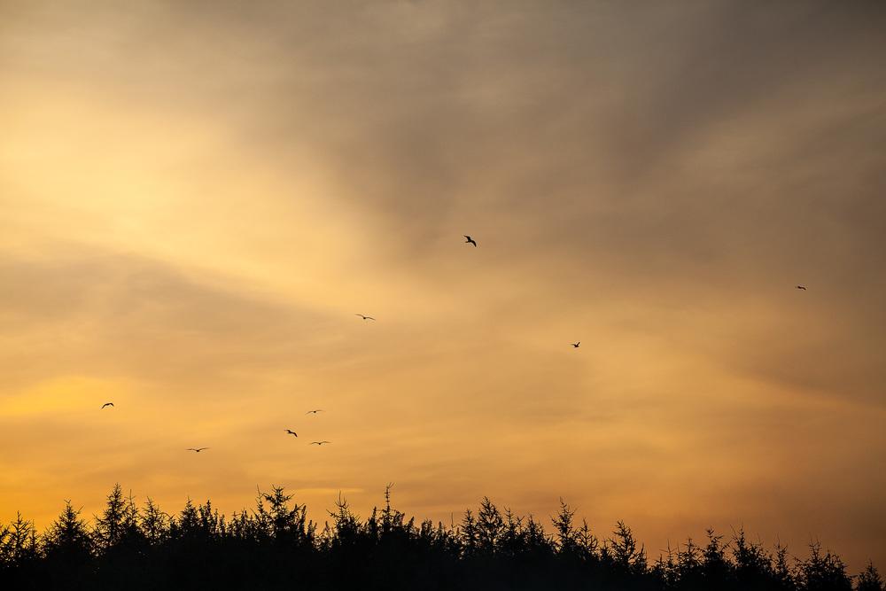 Sunset (2 von 1).jpg