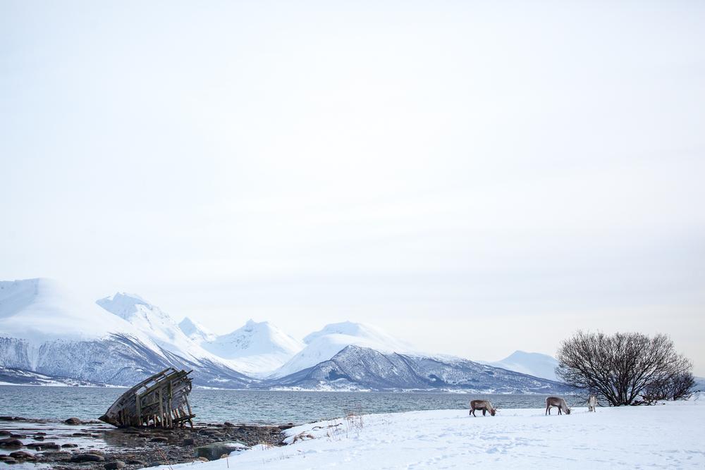 Norway Blog (75 von 119).jpg