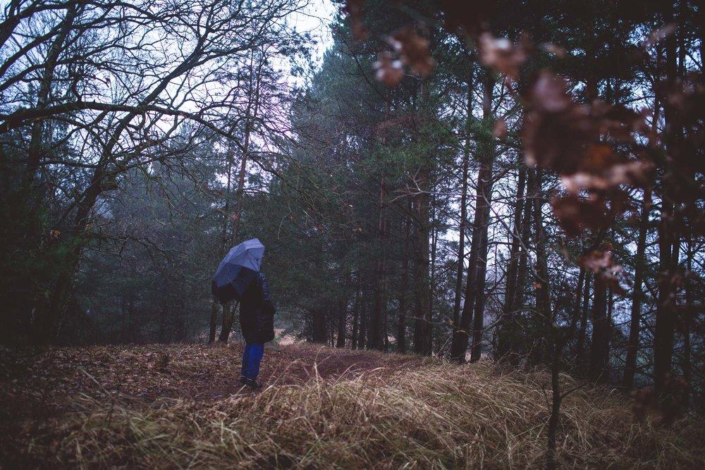 Lüneburger Heide-15.jpg