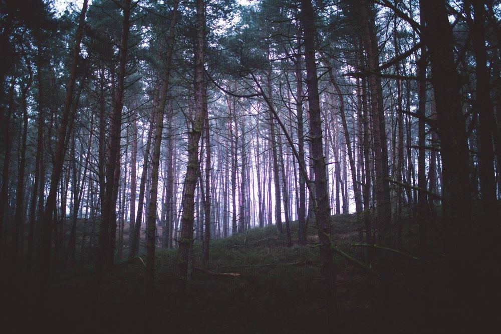 Lüneburger Heide-11.jpg