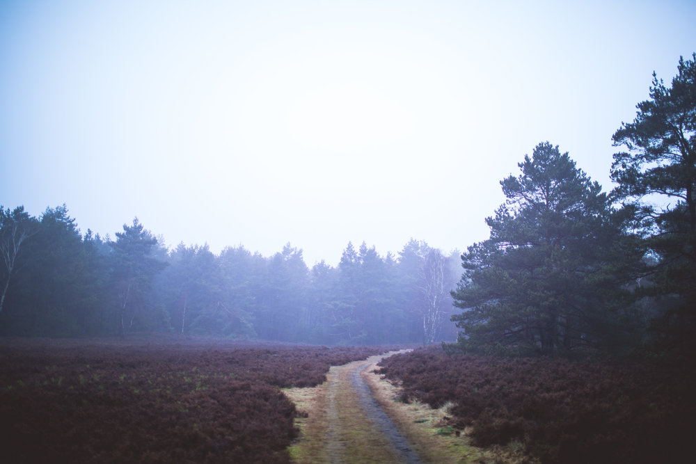 Lüneburger Heide-8.jpg