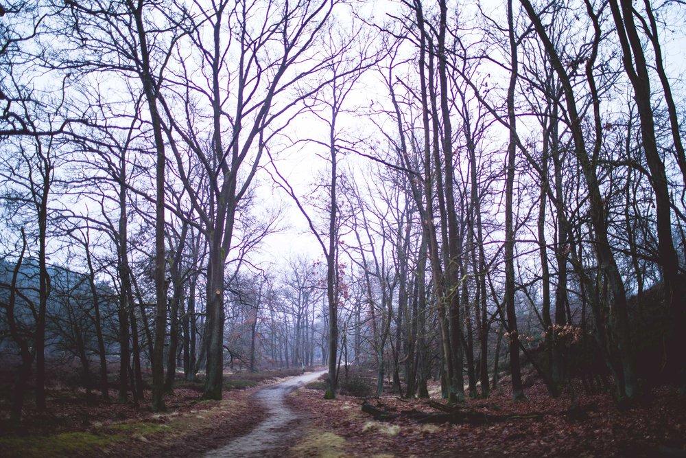 Lüneburger Heide-1.jpg