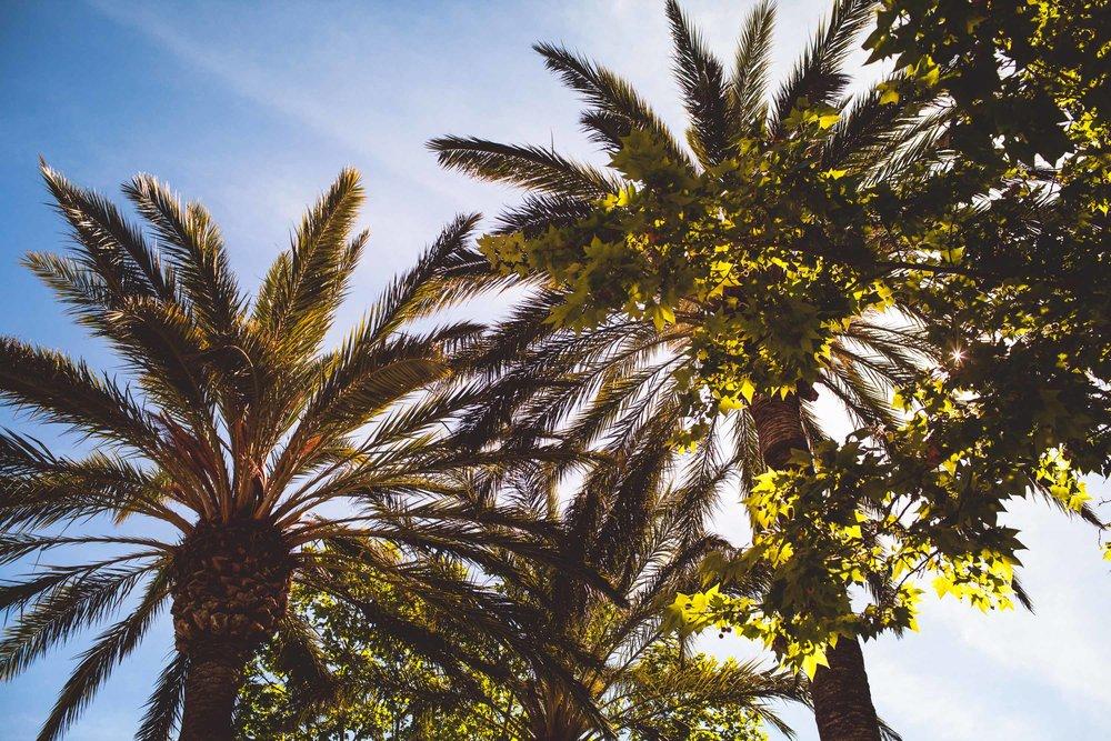 Mallorca-11.jpg