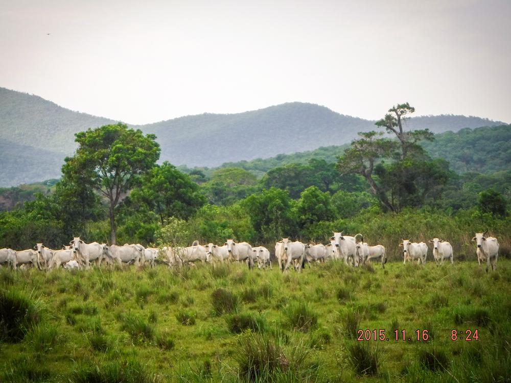 Brazil 064.jpg