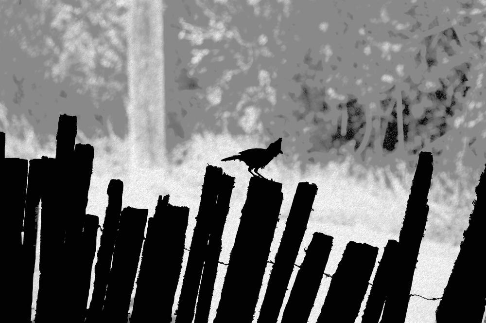 Haunted Fence copy.jpg