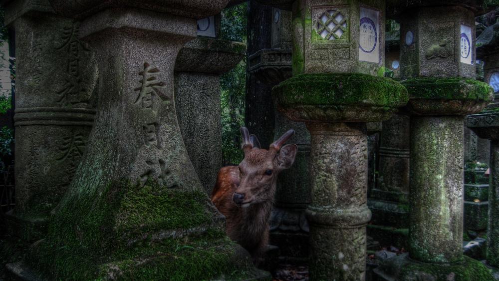 Deer3 copy.jpg