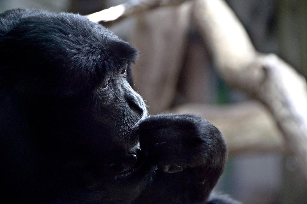 Monkey thinker copy.jpg