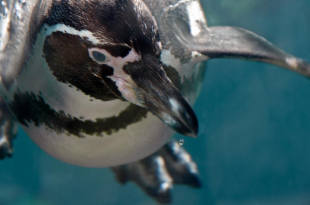 Penguin-new.jpg