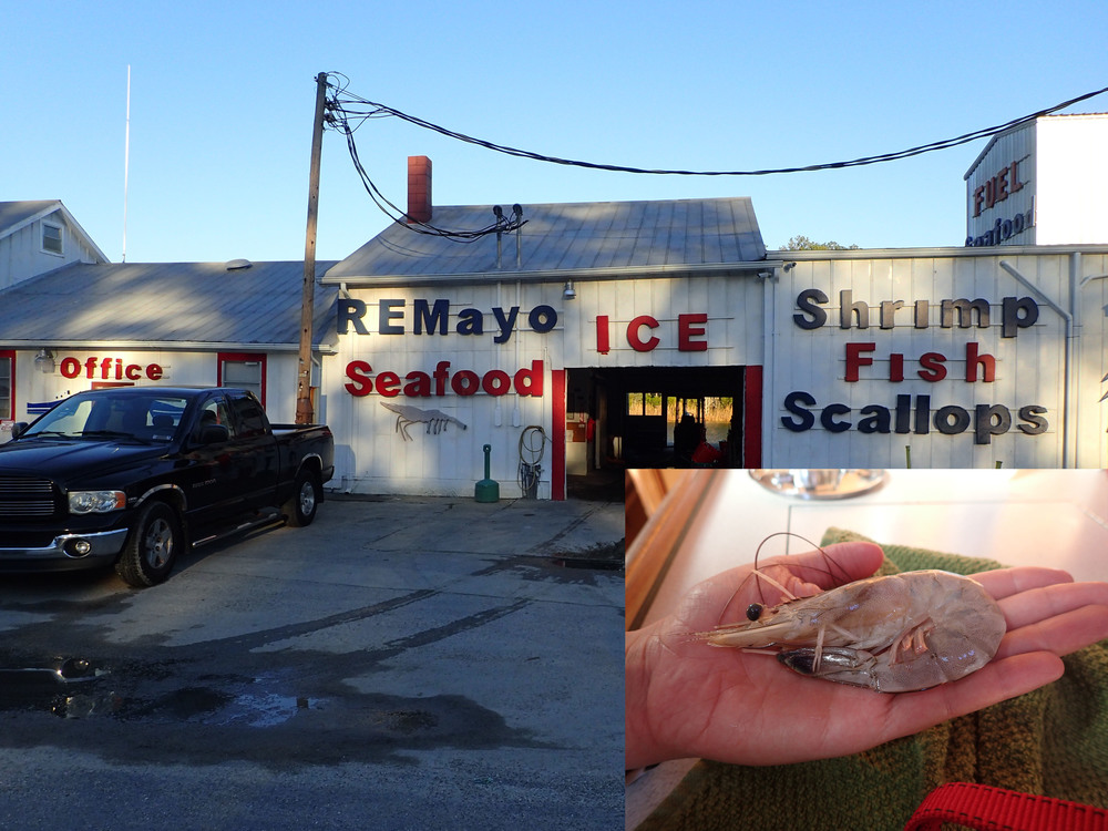 R.E. Mayo Seafood. One of the best stops on the trip. The shrimp only comes fresh, huge, and with all it's shrimp parts intact.
