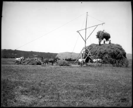 Stacking_alfalfa_Dawson_Ranch_Moffat_Road.jpg