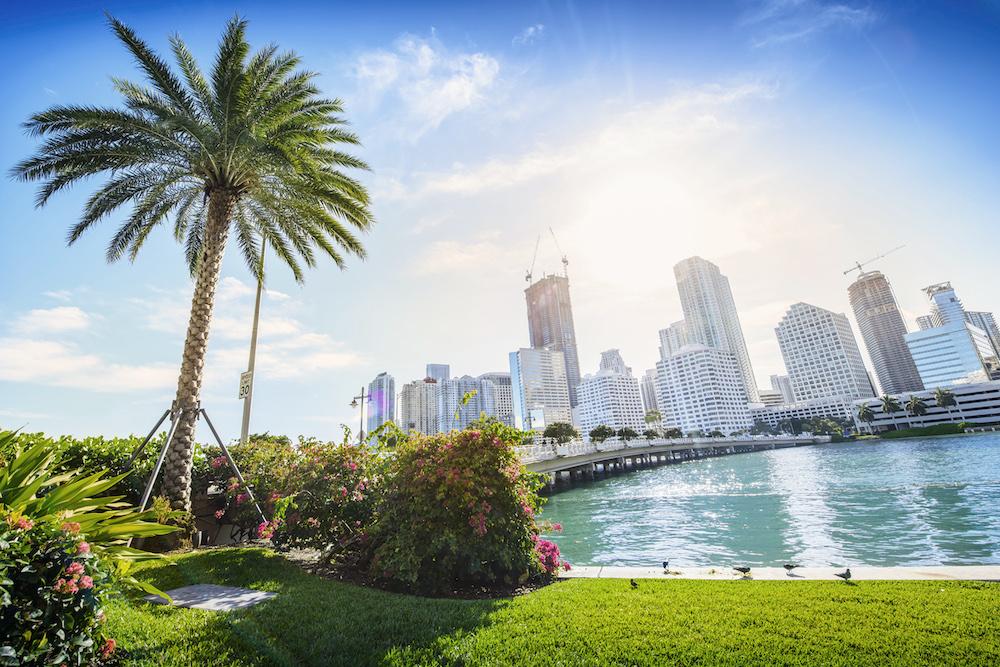 Bungii-Miami.jpg