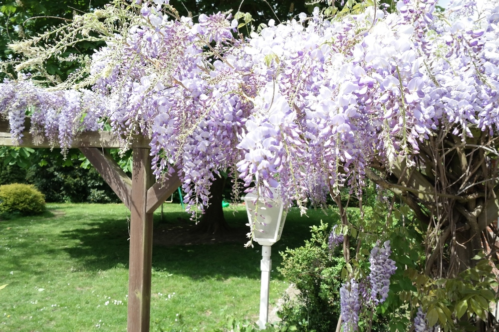 Garten2015nr2.jpg